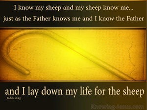 John 10:15
