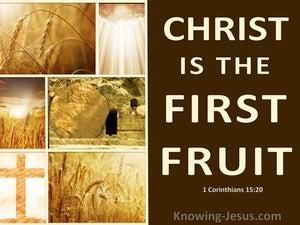 1 Corinthians 15:20