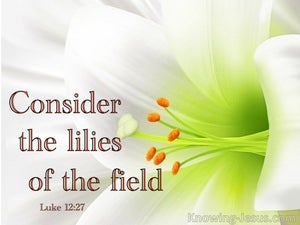 Luke 12:27