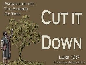 Luke 13:7