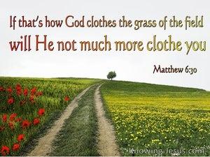 Matthew 6:30