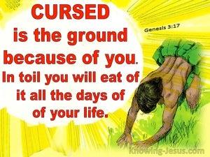 Genesis 3:17