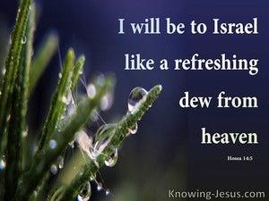 Hosea 14:5