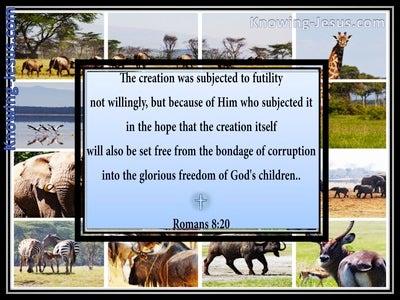 Romans 8:20